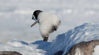 Nonton Penguin Fail 2     Film Subtitle Indonesia Streaming Movie Download