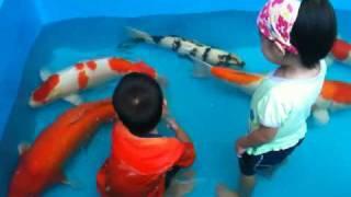 Koi Fishes And Kids