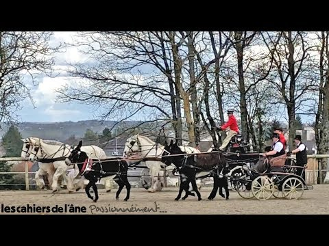 Carrousel attelages Grand Noir du Berry / Percheron
