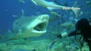 Pacific Harbour Fiji  city photos : Fiji shark diving with Aqua-trek at Pacific Harbour.