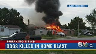More than a dozen dogs killed in house explosion in Pasco County