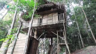 Kulai Malaysia  City pictures : Discover Malaysia: Kulai, Rainforest Tree House