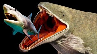 Video Mariana Trench Creatures That Are Scarier Than Megalodon MP3, 3GP, MP4, WEBM, AVI, FLV Maret 2019