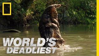 World's Deadliest - Lizard vs. Lizard