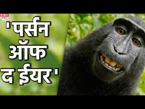 Indonesia का selfie लेने वाला Monkey बना 'Person of the Year'