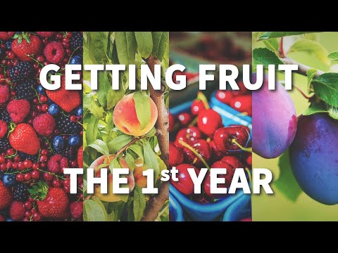 How to Get Fruit the 1st Year - Fast-Growing-Trees.com