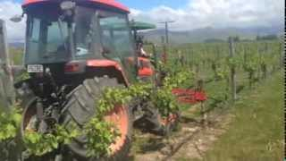 Re-planting 13000 vines at Mount Base. These vines have been dead for a number of years, by a variety of causes including Blackfoot. We now finally have ...