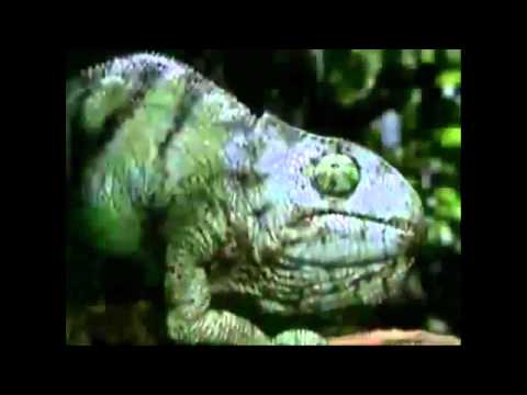Budweiser Frogs Commercials