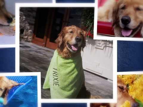 booktopia a big little life a memoir of a joyful dog
