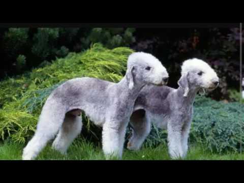 il terrier, una razza tutta da scoprire!
