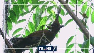 Video DUNIA BINATANG - KELUARGA MASTER KICAU (7/11/16) 3-1 MP3, 3GP, MP4, WEBM, AVI, FLV Juni 2019