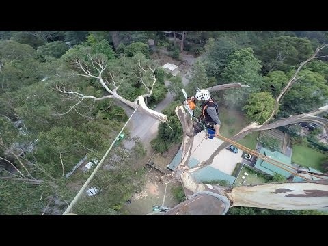 scinanie-40-metrowego-drzewa