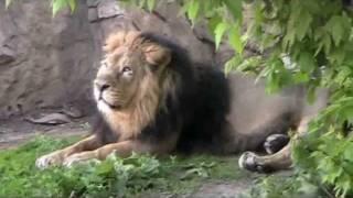 Московский зоопарк (лето)