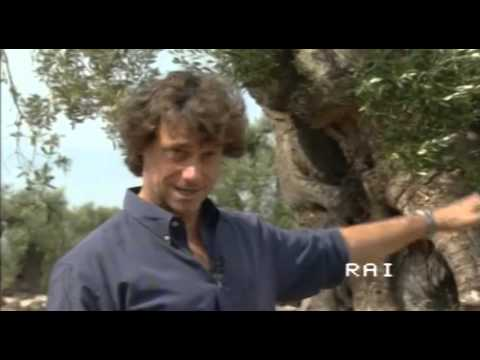 Alberto Angela Ulisse a Masseria Brancati - Oliveto