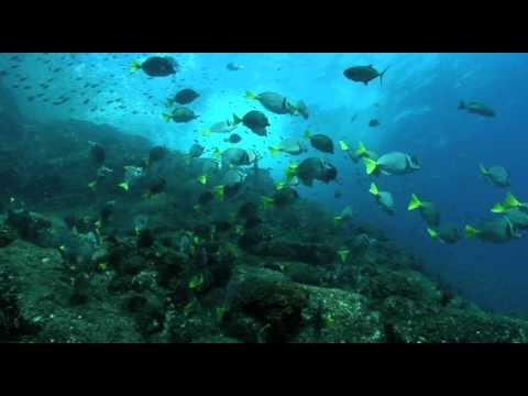 Biodiversidad de Cabo Pulmo