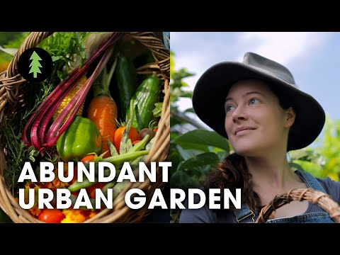 Growing an Abundance of Food in the City Using Permaculture