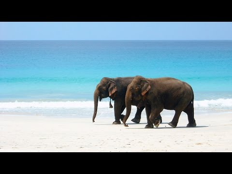 Andaman & Nicobar Islands, India | Aresviaggi видео