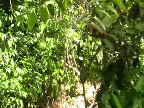 a little jungle walk