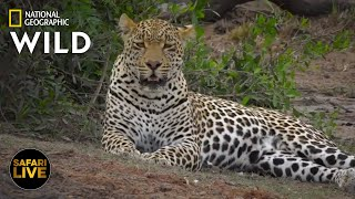 Safari Live - Day 297   Nat Geo Wild by Nat Geo WILD