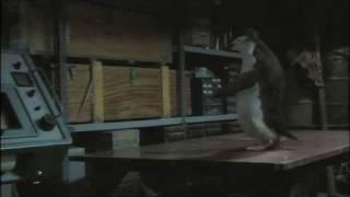 Пигвин играет в настольный теннис