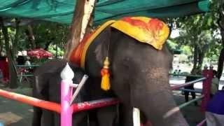バンコク市内観光ドゥシット動物園