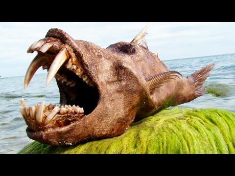10 недавно вымерших животных