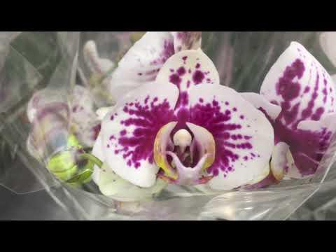 Краткий обзор орхидей в Леруа Мерлен Омск  22 09 2018 (видео)