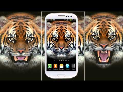 Video of Tiger Live Wallpaper