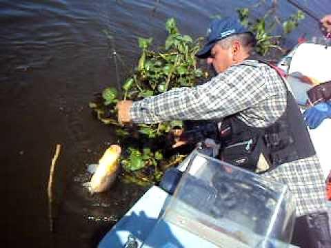 pescaria de piavuçu em ladario ms/ Marinho Atagiba,