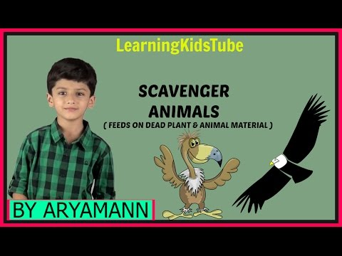 SCAVENGER ANIMAL: FEEDS ON DEAD PLANT AND ANIMAL MATERIAL BY ARYAMANN Science Lesson