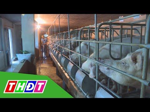 Nâng cao năng suất lao động ngành chăn nuôi | THDT - Thời lượng: 95 giây.