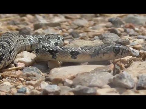Mallorca: Schlangenplage auf der Lieblingsinsel der D ...