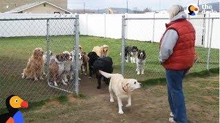 Sprawdzanie listy obecności po imieniu u bardzo inteligentnych psów :D