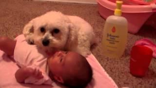 Pies wyczuł niebezpieczeństwo dla dziecka! Zobacz jak dzielnie stawał w jego obronie!