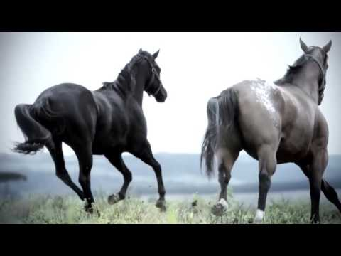 Amure   Horses Official Video