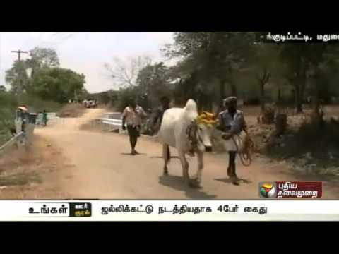 Four-arrested-on-charges-of-violating-the-ban-on-Jallikattu-near-Melur-Madurai-district