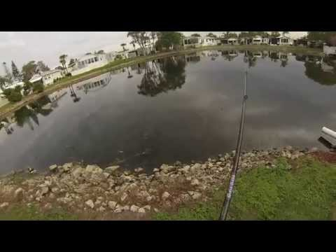 Fishing for bass in florida ponds for Bass pond construction
