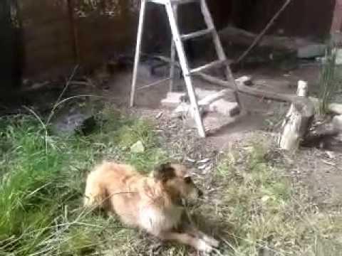 Un chien et un corbeau jouent à la balle