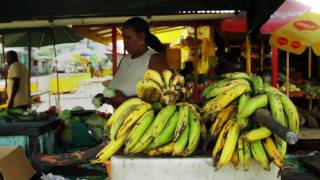 In 2006, a small group of farmers on the Caribbean island of Dominica launched the Dominican Organic Agriculture Movement...