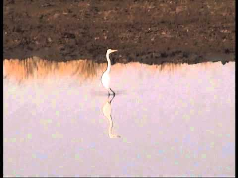 Pilanesberg Game Reserve Videos No 4