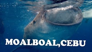 Our Short Trip to Moalboal, Cebu