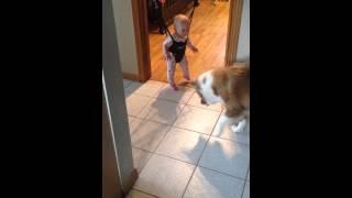 This Cute Dog Tries To Teach A Baby To Jump