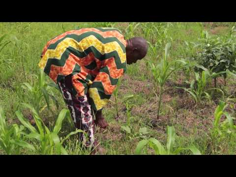 Measuring soil organic carbon on smallholder farms in Ghana