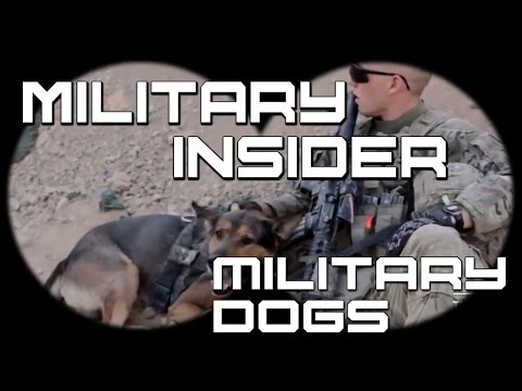 The 9 Biggest Myths About Military Working Dogs | Military Insider