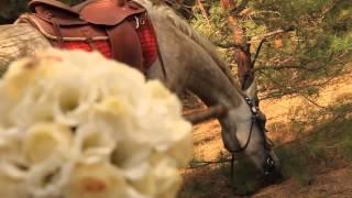 Свадьба Виктории и Андрея «Love & Horse»