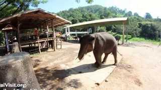Mae Taeng Elephant Park , Chiang Mai - Thailand