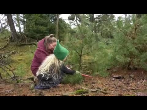 Ολλανδία: Χριστογεννιάτικο δέντρο… από δάσος