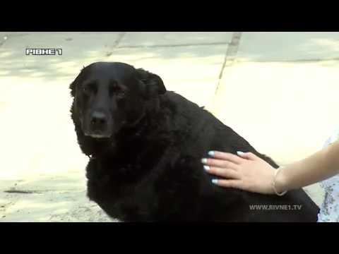 У Рівному просять встановити майданчики для вигулу собак [ВІДЕО]