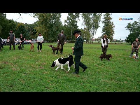 Pokaz psów myśliwskich - Hubertus Ziemiański Włoszczowa 2021