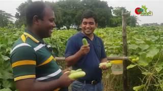 শসা(Cucumber) - এক বিঘায়...